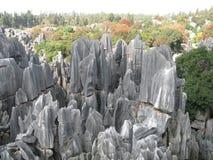 Het bos van de steen Stock Foto's