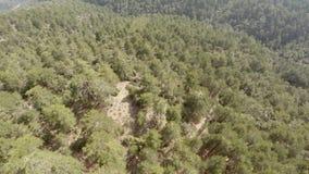 Het bos van de Troodosberg van hierboven stock videobeelden