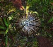 Het Bos van de Wildernis van de wildernis Stock Foto