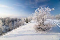 Het bos van de winter Stock Afbeeldingen