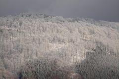 Het bos van de winter Royalty-vrije Stock Afbeeldingen