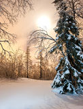 Het bos van de winter royalty-vrije stock foto