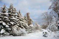 Het bos van de winter Stock Fotografie