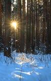 Het Bos van de winter Royalty-vrije Stock Foto's