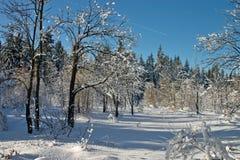Het bos van de winter stock foto