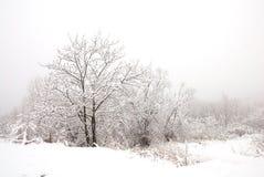De winterbos Royalty-vrije Stock Foto's