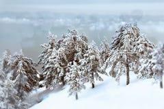 Het bos van de winter Royalty-vrije Stock Afbeelding