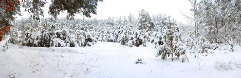 Het bos van de winter. Royalty-vrije Stock Fotografie