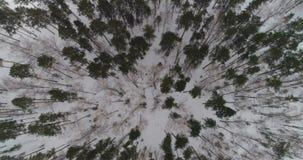 Het bos van de winter stock footage