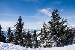 Het bos van de winter in bergen. Stock Afbeeldingen