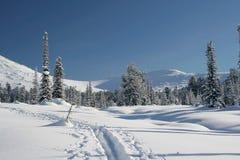 Het bos van de winter in bergen, ski-spoor Royalty-vrije Stock Fotografie