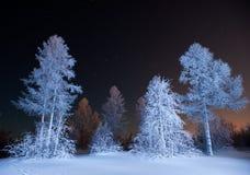 Het bos van de winter bij nacht stock fotografie