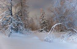 Het bos van de winter bij nacht Stock Afbeelding
