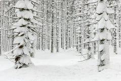 Het bos van de winter dat met sneeuw wordt behandeld royalty-vrije stock fotografie