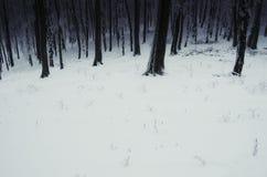 Het bos van de winter dat met sneeuw wordt behandeld stock foto