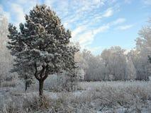 Het bos van de winter. Ijzige bomen Stock Fotografie