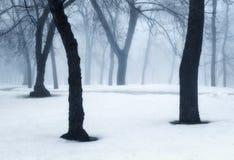 Het bos van de winter in mist Mistige bomen in de koude ochtend Stock Foto's