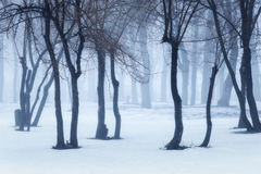 Het bos van de winter in mist Mistige bomen in de koude ochtend Stock Afbeeldingen