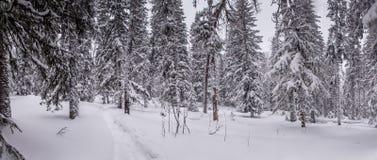 Het bos van de winter na een sneeuwval stock afbeelding