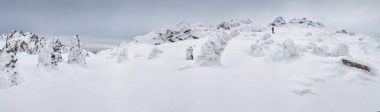 Het bos van de winter na een sneeuwval royalty-vrije stock afbeelding