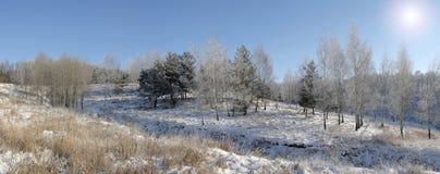 Het Bos van de winter (panorama) Royalty-vrije Stock Afbeeldingen