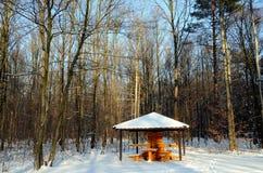 Het Bos van de winter in Polen Stock Afbeelding