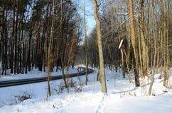 Het Bos van de winter in Polen Royalty-vrije Stock Foto