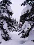 Het bos van de winter in Rusland Royalty-vrije Stock Afbeeldingen