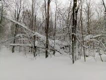 Het bos van de winter in Rusland stock afbeelding