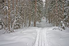 Het Bos van de winter. Skiër Royalty-vrije Stock Fotografie