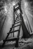 Het bos van de de winterbeuk stock fotografie