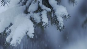 Het Bos van de de winterpijnboom met Sneeuwkerstbomen stock videobeelden