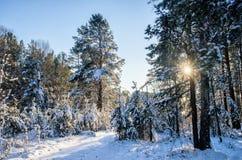Het bos van de de winterspar met sneeuw behandelde bomen en weg Royalty-vrije Stock Foto's