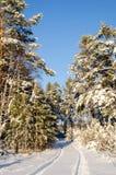 Het bos van de de winterspar met sneeuw behandelde bomen en weg Stock Foto