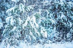 Het bos van de de winterspar met sneeuw behandelde bomen Verbazend seizoengebonden de winterbeeld Stock Foto's