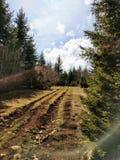 Het bos van de Wodsweg royalty-vrije stock afbeeldingen