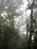 Het bos van de wolk Stock Foto