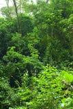 Het bos van de wolk in Ecuador Stock Foto's