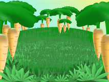 Het bos van de wortel Royalty-vrije Stock Foto