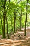 Het bos van de zomer Stock Afbeeldingen