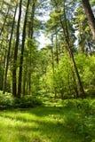 Het bos van de zomer royalty-vrije stock afbeelding