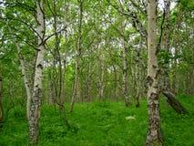Het bos van de zomer stock fotografie
