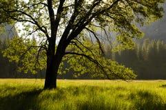 Het bos van de zomer Royalty-vrije Stock Foto
