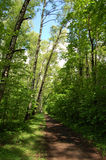 Het bos van de zomer Royalty-vrije Stock Foto's