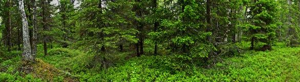Het bos van de zomer stock afbeelding