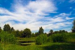 Het bos van de zomer stock foto's
