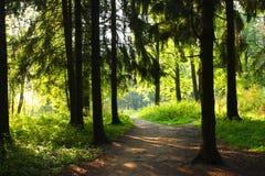 Het bos van de zon Royalty-vrije Stock Foto's