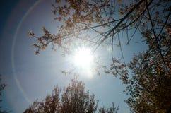 Het bos van de zon glanzende herfst Stock Afbeeldingen
