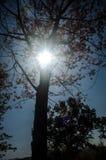 Het bos van de zon glanzende herfst Stock Fotografie