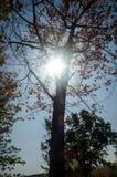 Het bos van de zon glanzende herfst Royalty-vrije Stock Foto